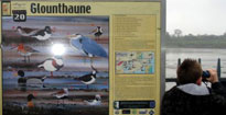 Poster showing wading birds on an Irish beach taken by teacher Mr McSweeney